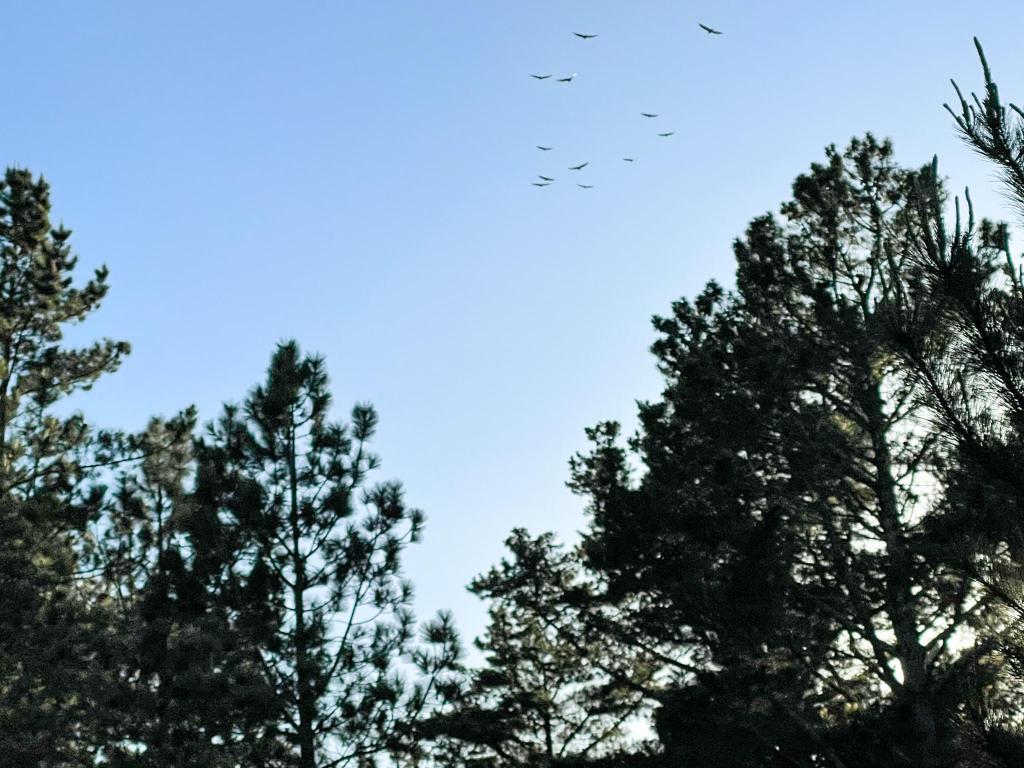 Birds flying past trees