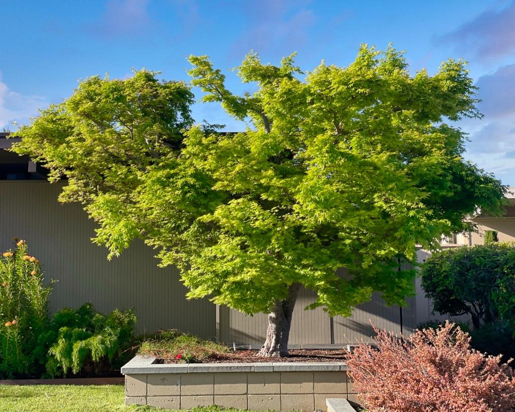 Tree in a yard