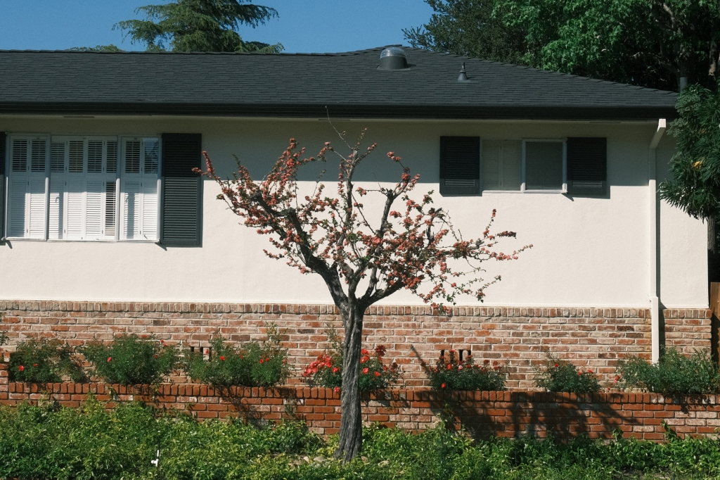 Tree in front of a house