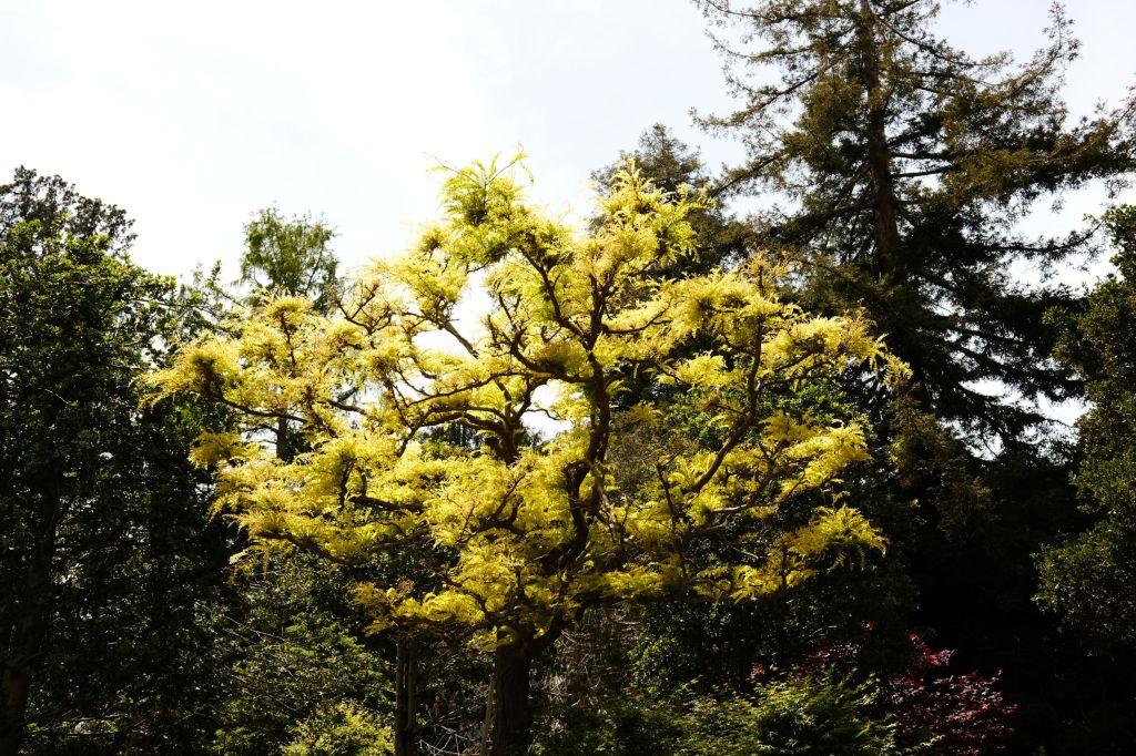 Yellow-green tree
