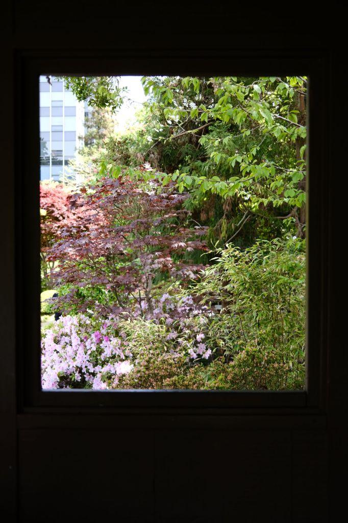 Nature through a window