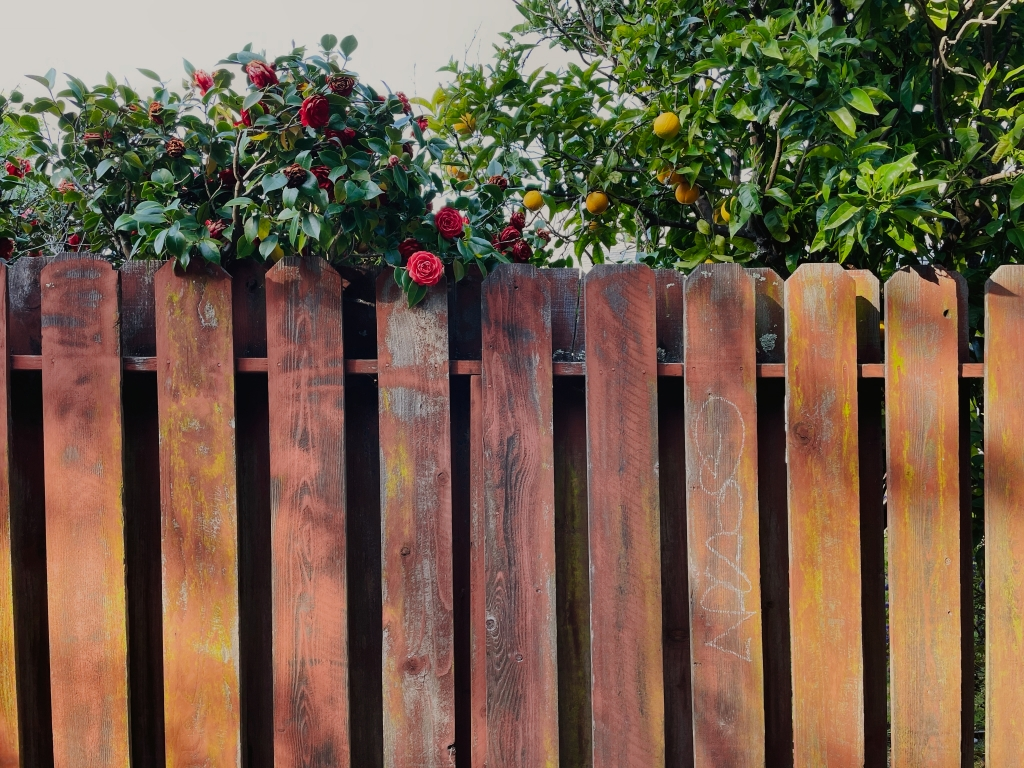 Flowers above a fence