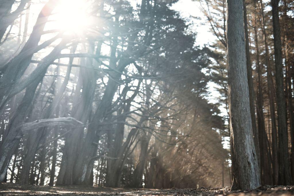 Sun rays through trees on a path