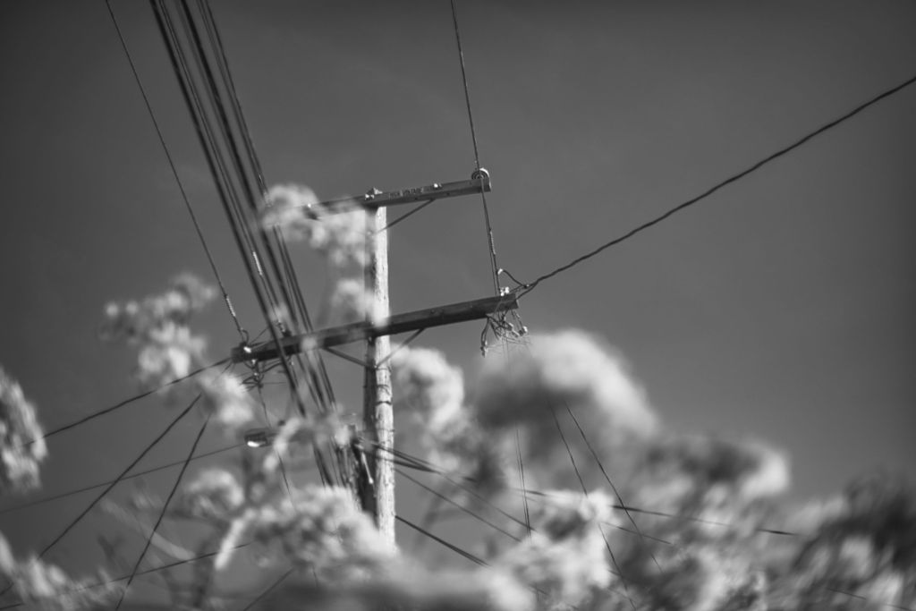 Powerlines above some flowers