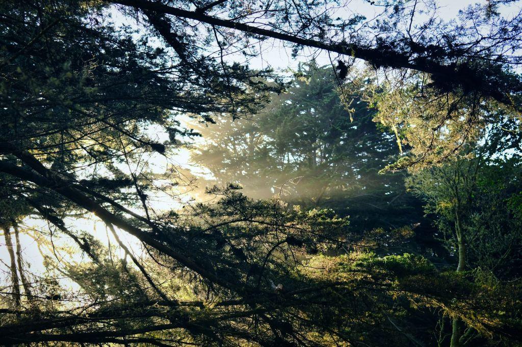 Sunrise rays through trees