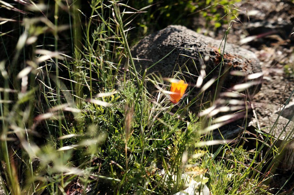 Flower amongst grass